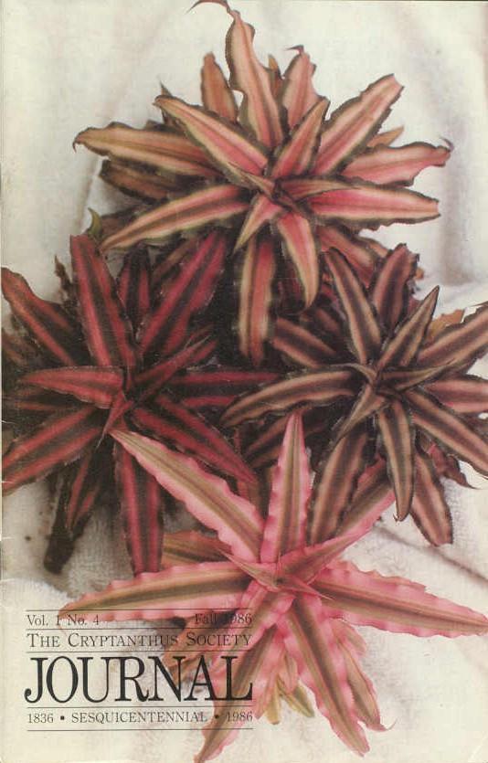 Cryptanthus Bivittatus Ruby Ruby Bivittatus